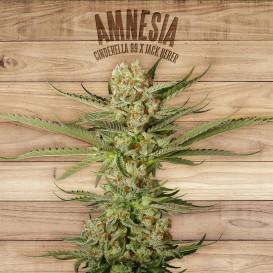 Amnesia feminizada de The...