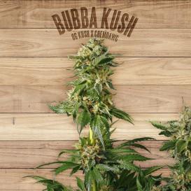 Bubba Kush feminizada de...