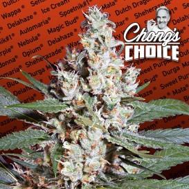 Chongs Choide L.A. Amnesia...