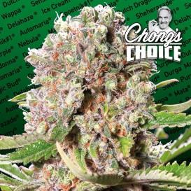 Chongs Choide Mendocino...