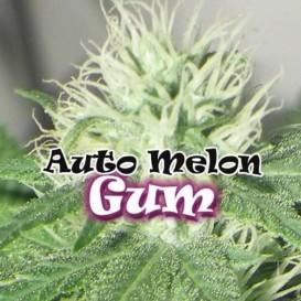 Auto Melon Gum de Dr....