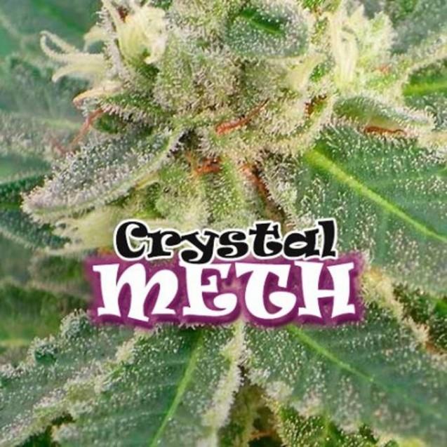 Crystal M.E.T.H. feminizada de Dr. Underground