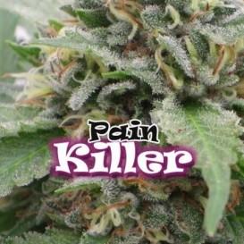 Painkiller feminizada de...
