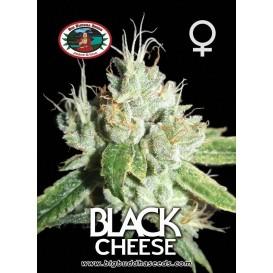 Black Cheese feminizada de...
