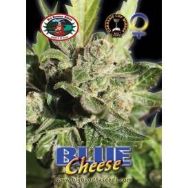 Blue Cheese feminizada de...