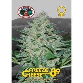 Freeze Cheese 89 feminizada...