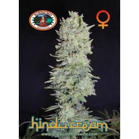 Hindu Cream feminizada de...