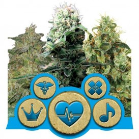 Medical Mix CBD feminizada de Royal Queen Seeds