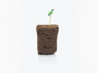 Como germinar semillas de marihuana en plugs húmedos o fleximix